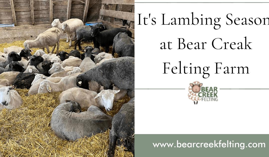 Lambing Season at Bear Creak Farm