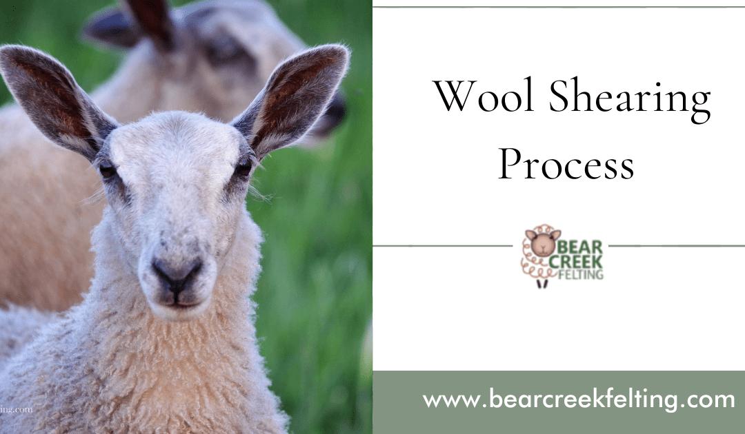 Wool Shearing Process