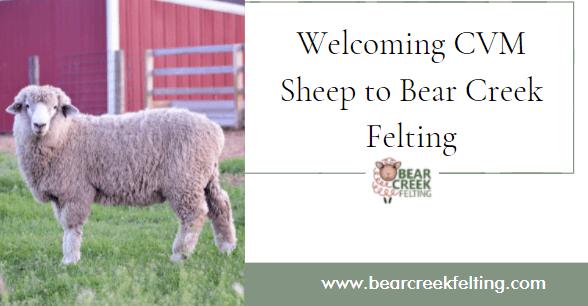 Welcoming CVM Sheep to Bear Creek Felting